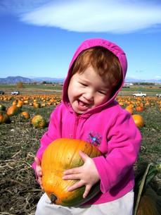 わたしのかぼちゃ(ハロウィン用かぼちゃ拾い)の写真素材 [FYI00145245]