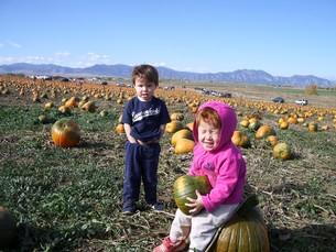 ハロウィン用のかぼちゃ拾いの写真素材 [FYI00145246]