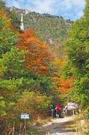 紅葉シーズンの登山道入口の素材 [FYI00145259]