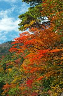 湯の山温泉の紅葉の素材 [FYI00145263]