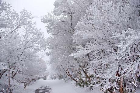 樹氷並木(御在所岳山頂付近)の素材 [FYI00145329]