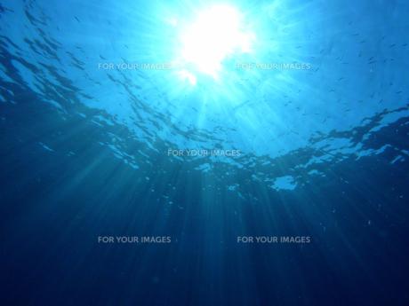 海中に差し込む太陽の光の素材 [FYI00145434]