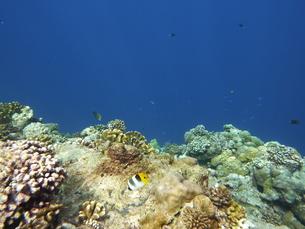 珊瑚礁の素材 [FYI00145461]