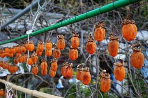 干し柿の写真素材 [FYI00145463]