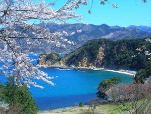 桜と海の素材 [FYI00145470]