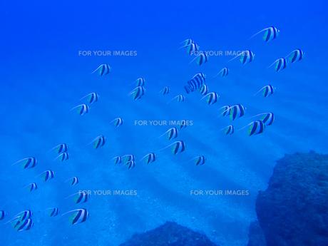 冬を待つ青く静かな伊豆の海の素材 [FYI00145491]