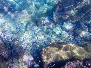 青く透明に輝く伊豆の海の素材 [FYI00145492]