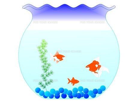 金魚蜂の金魚の素材 [FYI00145581]