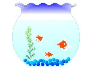 金魚蜂の金魚の写真素材 [FYI00145581]