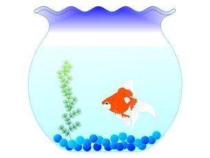 金魚蜂の金魚の素材 [FYI00145596]