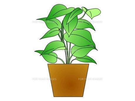 観葉植物の素材 [FYI00145606]