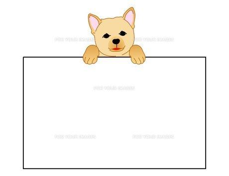 犬のメッセージボードの写真素材 [FYI00145609]