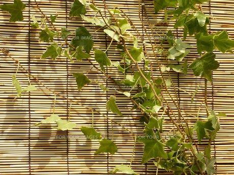 緑のカーテンの素材 [FYI00145616]