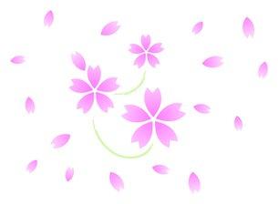 桜の素材 [FYI00145623]
