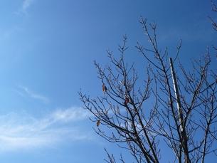 冬空の素材 [FYI00145651]