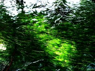 揺れる水草の写真素材 [FYI00145663]