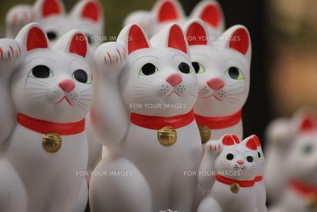 招き猫の写真素材 [FYI00145686]