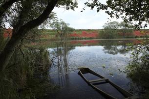 津屋川の彼岸花の写真素材 [FYI00145891]
