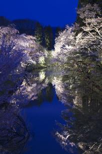 上田城 桜ライトアップの素材 [FYI00145895]