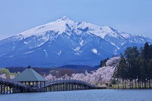 岩木山と桜の素材 [FYI00145910]