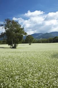 蕎麦畑 たかつえ高原の写真素材 [FYI00145942]