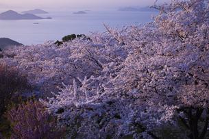 紫雲出山の写真素材 [FYI00146125]