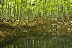 美人林の写真素材 [FYI00146132]
