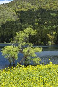 北竜湖の素材 [FYI00146141]