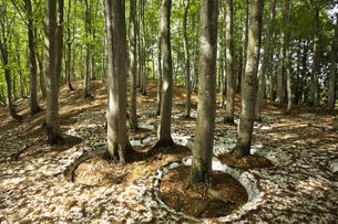 美人林の写真素材 [FYI00146153]