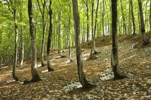 美人林の写真素材 [FYI00146154]