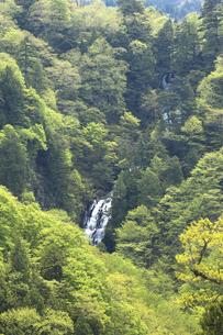 双竜峡 黒滝の素材 [FYI00146211]