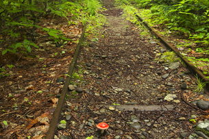 薬研渓谷 森林軌道跡の写真素材 [FYI00146260]