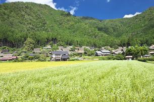 京都 美山かやぶきの里の写真素材 [FYI00146316]