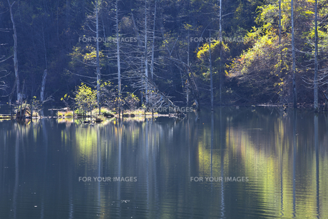 長野 王滝村 自然湖の素材 [FYI00146346]