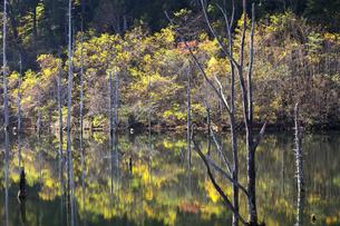 長野 王滝村 自然湖の素材 [FYI00146347]