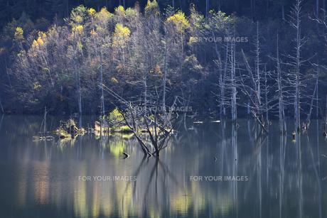 長野 王滝村 自然湖の素材 [FYI00146355]