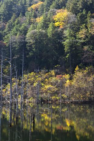 長野 王滝村 自然湖の素材 [FYI00146362]