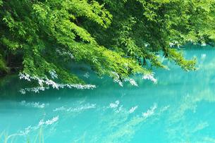 福島 北塩原村 五色沼 青沼の写真素材 [FYI00146531]