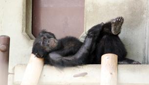 お猿さんの休息の写真素材 [FYI00146685]