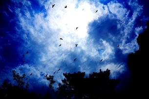 Beautiful Skyの写真素材 [FYI00146828]