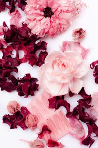 pink flowersの写真素材 [FYI00146891]