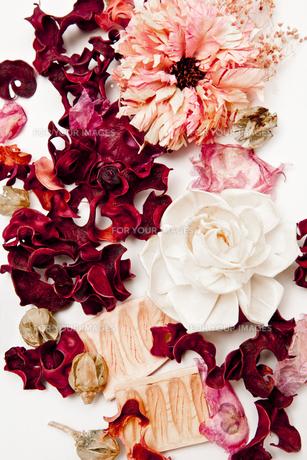 flowersの写真素材 [FYI00146902]