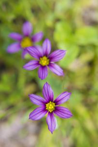 花の写真素材 [FYI00147145]
