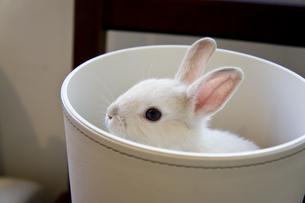 Rabbit show upの写真素材 [FYI00147156]