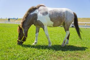 Horseの写真素材 [FYI00147161]