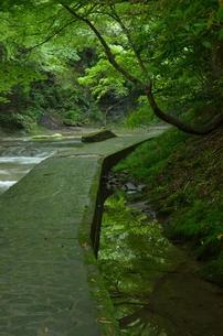 新緑の遊歩道の写真素材 [FYI00147352]