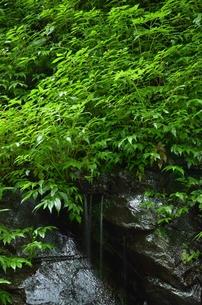 新緑の清水の写真素材 [FYI00147364]