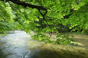 新緑の清流の写真素材 [FYI00147367]