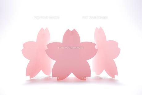 桜のメッセージカードの写真素材 [FYI00147394]