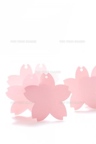 桜の可愛いメッセージカードの写真素材 [FYI00147400]